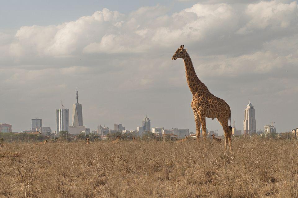Cheap Flights From San Francisco To Nairobi Kenya 620rt