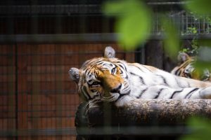 Top Zoos in America Perfect For Family Travel
