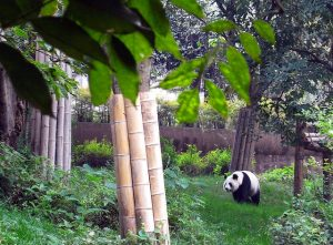 United – $591: Portland – Chengdu, China. Roundtrip, including all Taxes