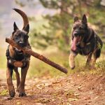 Outdoor Activities You and Your Dog Should Try