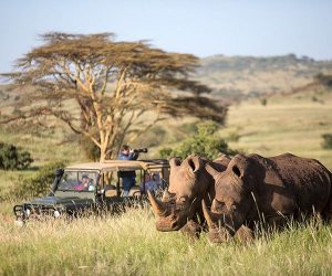 Africa's top 5 places to spot rhino