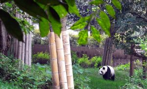 United: Portland – Chengdu, China. $509. Roundtrip, including all Taxes