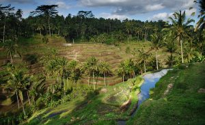 Cathay Pacific: San Francisco – Bali, Indonesia. $636. Roundtrip, including all Taxes