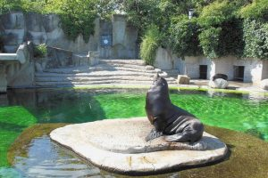 Artis Royal Zoo: A Kid-Friendly Must-Visit Attraction in Amsterdam