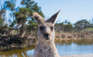 A Guide to Living Like an Aussie Local