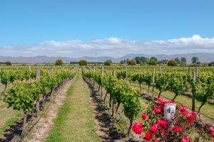 The Best Wine Regions in Australia