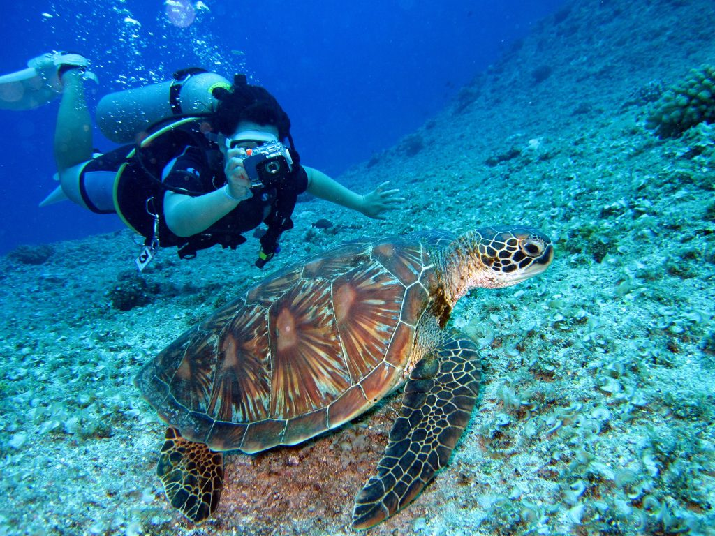 Scuba Diving in 2020? These Are Some Of The Best Diving Destinations
