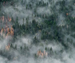 Photograph of the week: Yosemite National Park, Sierra Nevada, California, USA