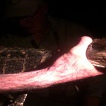 Safer Travel from the Coronavirus to Crocodiles