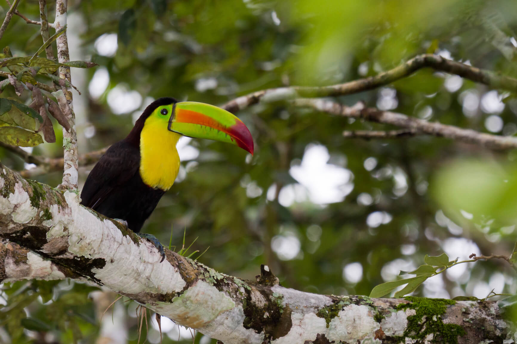 Non-stop from London, UK to Liberia, Costa Rica for only £349 roundtrip