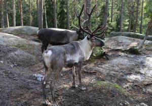 Why you should visit Lapland