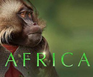 Wilderness in waiting: 5 unmissable wildlife documentaries
