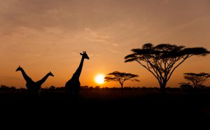 Los Angeles to Nairobi, Kenya for only $564 roundtrip (Oct-Jun dates)
