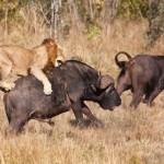 Solo Traveler Tips Wildlife Adventure Tour Safety